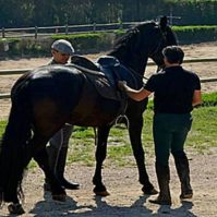 Clase_altorendimiento_caballo